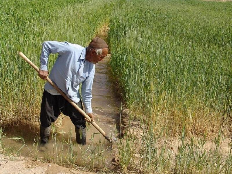 کشاورزان خوزستانی امسال محدودیت کشت ندارند