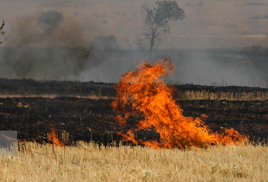 ۱۰۰ هکتار از مزارع گندم اندیمشک در آتش سوخت