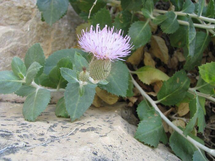 یک گونه گیاهی جدید توسط محققان دانشگاه شهید چمران اهواز کشف شد