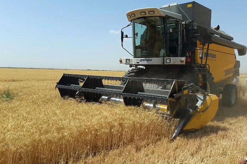 خرید یک میلیون و ۶۳ هزار تن گندم در خوزستان