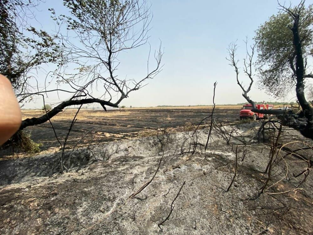 جنگلهای حفاظت شده کرخه و سریال ادامه دار آتشسوزی