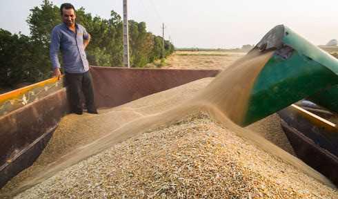 حمل ۲۶۰ هزار تُن گندم از خوزستان به سایر استانها