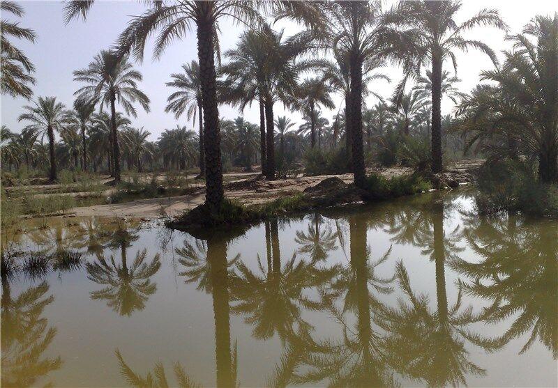 آغاز رهاسازی آب از سد مارون برای تامین حقآبه نخلستانهای خوزستان