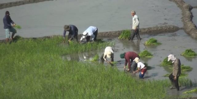 سوءمدیریت در حوزه آب، ابَر معضل بخش کشاورزی است